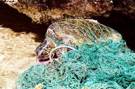 First Steps to Raising Awareness About Ocean Pollution