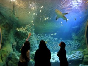 The St. Louis Aquarium is a great new summer attraction!