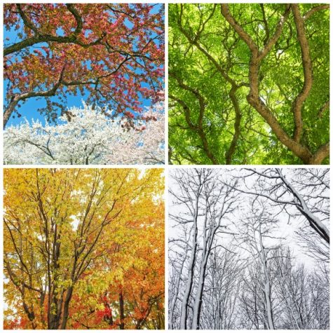 Take this quiz to find out what season you are most similar to!